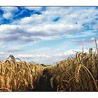 Wheat Field - (Steeple Mordern, Hertfordshire) by MoGeoPhoto