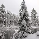 Winter in Algonquin  by Dawne Olson
