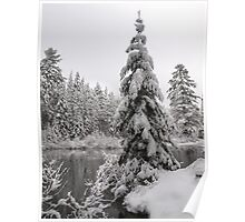 Winter in Algonquin  Poster