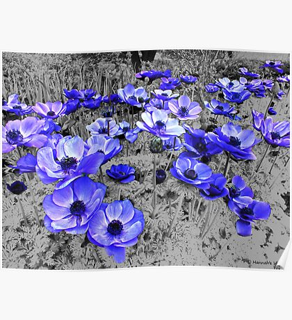 Purple Anemones For Everyone  Poster