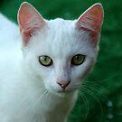 kitty  by mkokonoglou