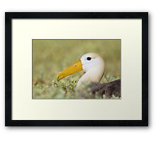 Out of the green sea Framed Print