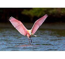 Pink display Photographic Print
