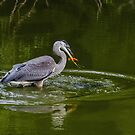 Fishing Success for a Great Blue Heron by Gerda Grice