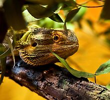 Lizard in hiding by DavidsArt