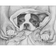 Little Paws in Strong Hands Photographic Print