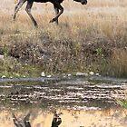 Wild and Free by Ann  Van Breemen