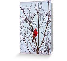 Cardinal in the Dogwood Tree in December Greeting Card