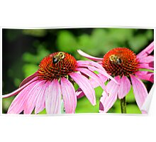 Purple Coneflowers Poster