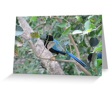 Exotic Bird of Mexico Greeting Card