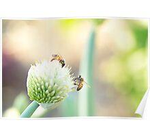 Bees and Bokeh II Poster