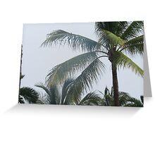 Palm Tree Sway Greeting Card