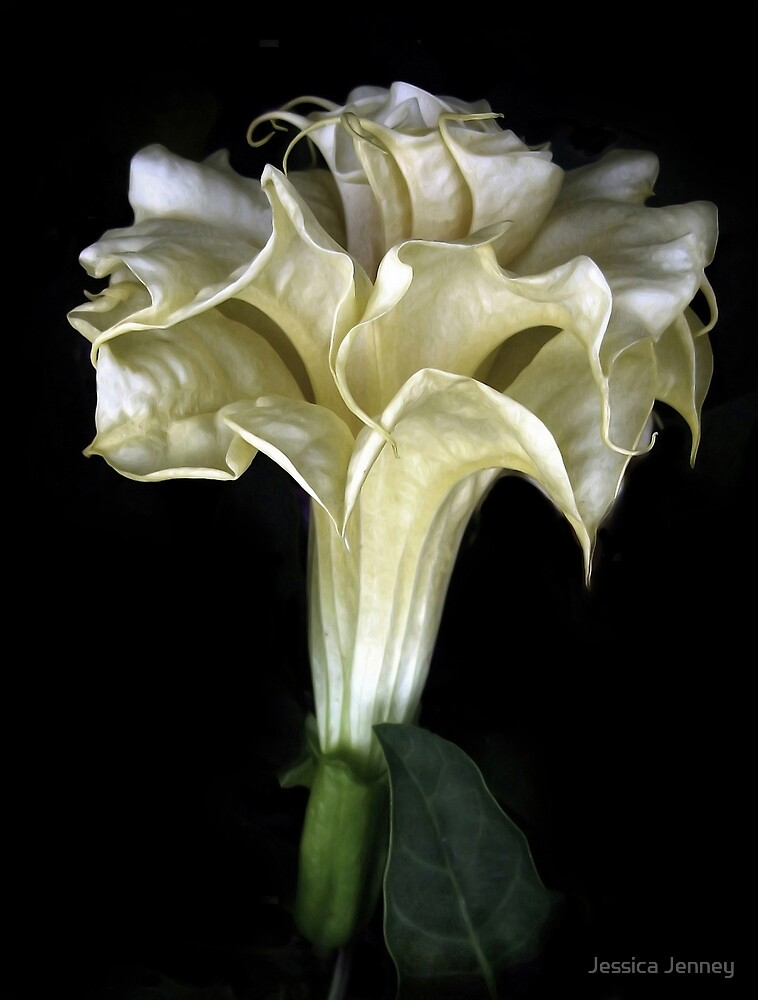 Angel Trumpet by Jessica Jenney
