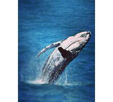Whale Adventure  Photographic Print