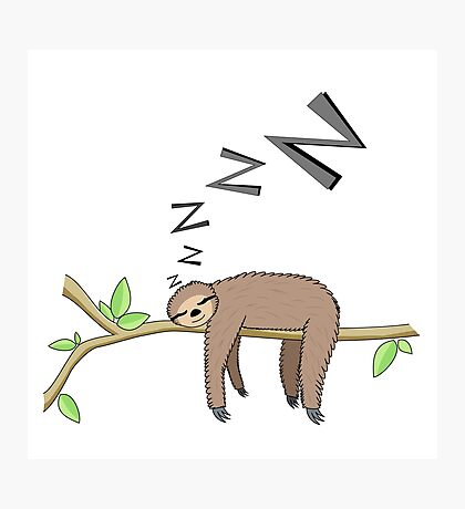 Sleeping sloth Photographic Print
