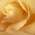 Gold Rose Ruffles by edesigns14