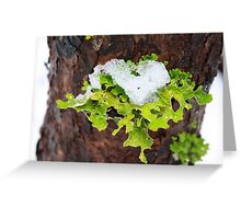 Icy heart Greeting Card