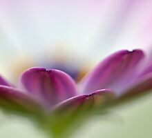 Purple Petals by Susan Tong