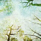 Trees Up High Abstract Photographic Art by Natalie Kinnear