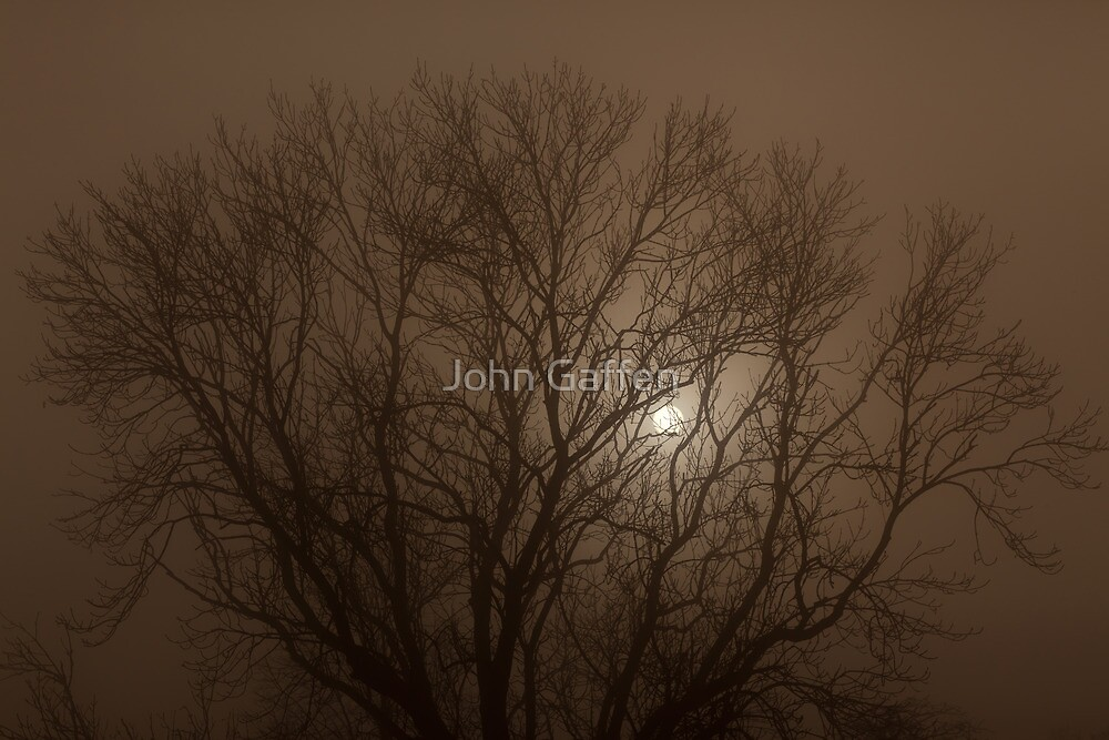 Autumnal Tree Silhouetted against a foggy sun by John Gaffen
