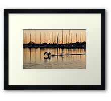 The Golden Takeoff - Swan, Sunset and Yachts at a Marina in Toronto, Canada Framed Print