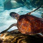 Morning Snorkel with a Green Turtle by Jaxybelle