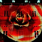 Rose projected by Janet GATHIER-COOMBER
