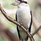 Kookaburra in Kings Park by mncphotography
