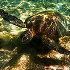 Large Green Turtle by Jaxybelle
