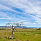 Rural Tasmania by pennyswork