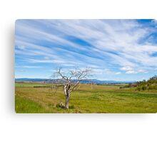 Rural Tasmania Canvas Print