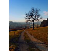 Tree, trail and indian summer evening | landscape photography Photographic Print