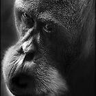 Perth zoo Orang Utan by BeninFreo