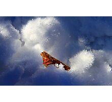 Ice Leaf Photographic Print