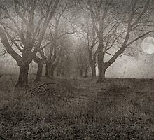 A Gray Day by Pat Abbott