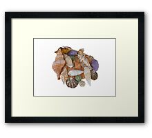 Happy Shells Framed Print