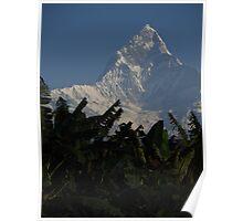 Banana Crop & Fishtail Mountain Poster
