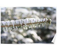 evergreen snow Poster