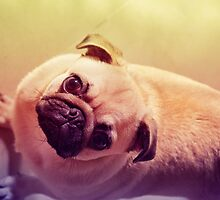 Pug by mariaadil