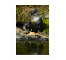 Posing sea lion Art Print