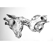 Metamorphosis: Giraffe Lynx Skull Photographic Print