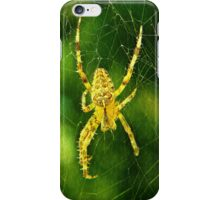 Spider and Web iPhone Case/Skin