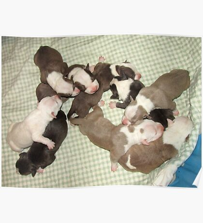 Wonder's New Puppies - One Day Old Poster
