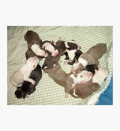 Wonder's New Puppies - One Day Old Photographic Print