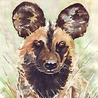 Wildlife of Africa 1 by Maree  Clarkson