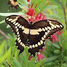 Butterfly Jungle by Bob Hardy