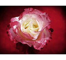 Mellow Passion Photographic Print