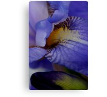 blue iris flower and bud abstract Canvas Print
