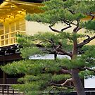 Golden Pavilion in Kyoto by Cebas
