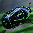 Green Bug by Liz Worth